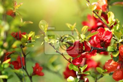 Obraz oddziałów z czerwonymi kwiatami