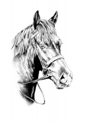 odręczny rysunek ołówkiem głowa konia