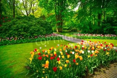 Obraz Ogród w Keukenhof, kwiaty tulipanów i drzew na tle wiosną Holandia, Europa