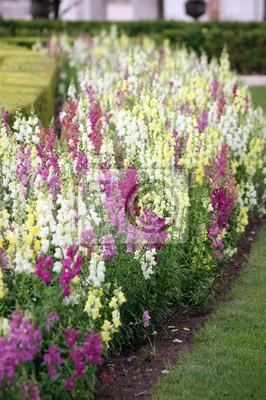 Ogród z kolorowych kwiatów