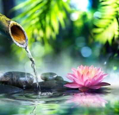 Obraz ogród zen z czarnych kamieni i różowym lilii wodnej