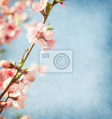 Old paper texture with peach blossom.
