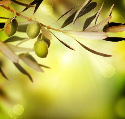 Obraz Olive granicznym design.Food