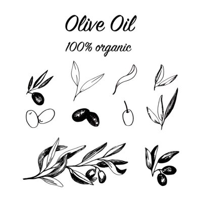 Olives set with olive branches and fruits for Italian cuisine design or extra virgin oil food or cosmetic prod uct packaging wrapper. Hand drawn Illustration in vector.