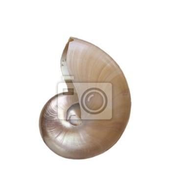 Opalescent shell nautilus na białym