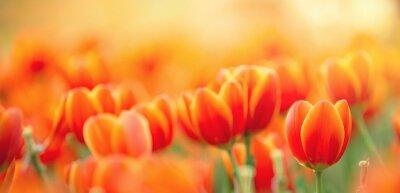 Obraz orange tulips on a green background