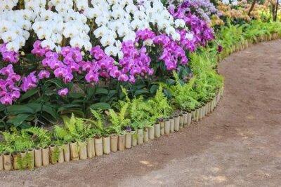 Obraz Orchid flower in orchid public garden.