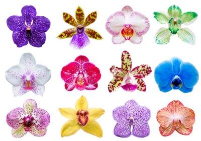 Obraz Orchid kwiat samodzielnie na białym tle