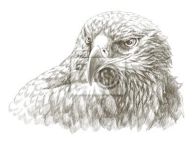 Obraz Orzeł Rysunek Ołówkiem Sztuka Na Wymiar Sztuka Tekstura