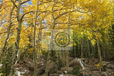 Osiki i głazy w Rocky Mountain National Park