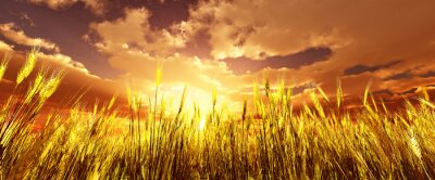 Obraz Ote pole pszenicy