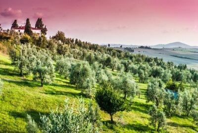 Obraz Paesaggio di campagna Toscana, Colline coltivazioni, Agricoltura