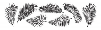 Obraz Palm leaf vector, black summer branch plant jungle, nature set icon isolated on white background. Tropic illustration