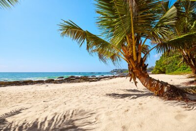 Palm tree on a tropical beach.