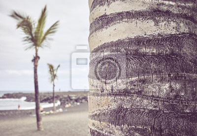 Palm tree trunk on a beach, color toned picture, selective focus.