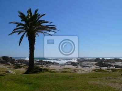 Palme und Meer - Kapstadt