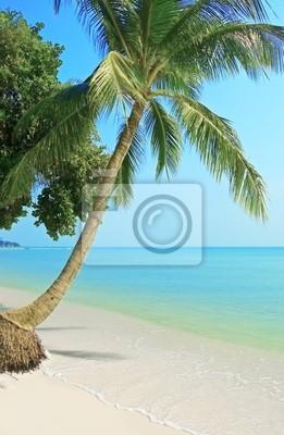 Obraz Palmtree