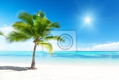 palmy i morze