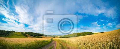 Obraz Panorama pola pszenicy rano w Kansas