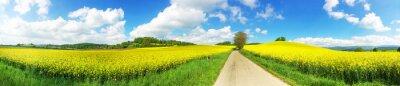 Obraz Panoramiczny obraz pola rzepaku i drogi