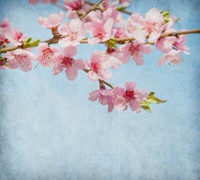 papieru grunge z Peach Blossom