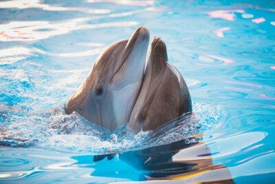 Obraz Para delfinów taniec w wodzie