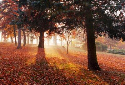 Obraz Park z drewna - Jesień