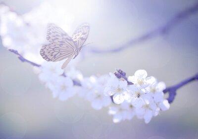 Obraz Pastel kolorowe zdjęcie wiosennych kwiatów i motyli