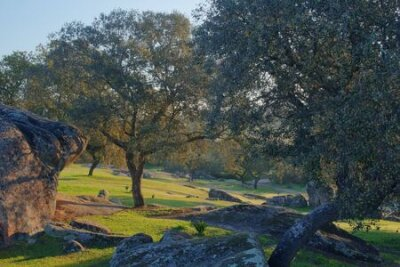 Obraz pasture caught at dawn where trees and rocks bathed in sunlight are seen