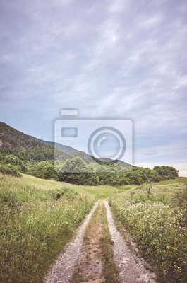 Path in Mala Fatra National Park on a cloudy day, color toning applied, Slovakia.