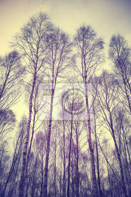 Patrząc się przez drzewa, retro filtrowane tło.