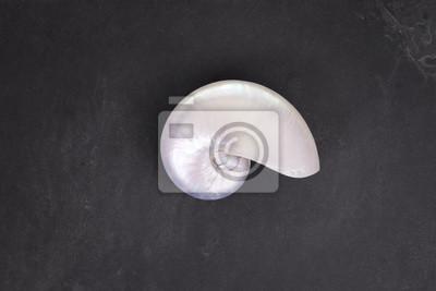 Pearl powłoki chambered nautilus na czarnym tle łupek.