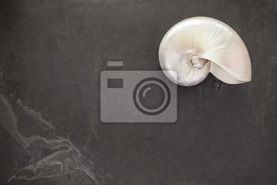 Pearl powłoki chambered nautilus na czarnym tle łupek z miejsca kopiowania.