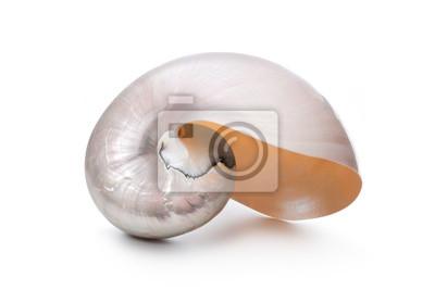 Pearl powłoki z Nautilus Pompilius