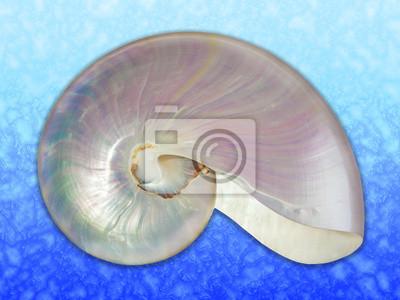 Pearl powłoki z Nautilusa.