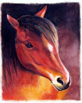Obraz Pferdekopf - Zeichnung
