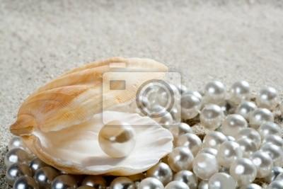 piaszczystej plaży pearl shell clam macro