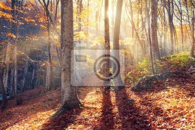Piękna jesień zachód słońca w lesie