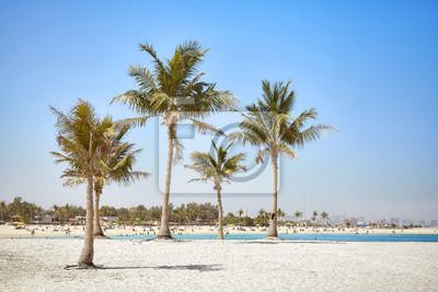 Piękna plaża z kokosowymi palmami blisko Dubaj, Zjednoczone Emiraty Arabskie.