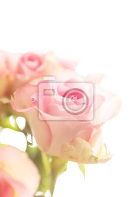 Obraz piękna róża