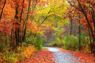 Obraz Piękne alBeautiful aleja w kolorowe jesienią timeley w kolorowe czasie jesieni