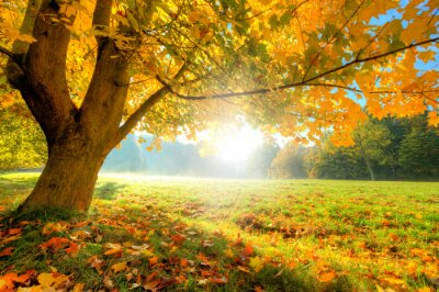 Obraz Piękne drzewa jesienią z suchych liści opadłych