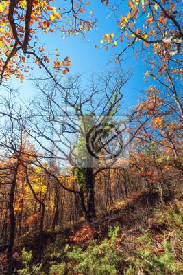 Piękne drzewo. Jesienny wieczór w lesie