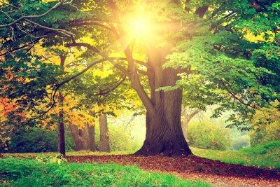 Obraz Piękne drzewo parku