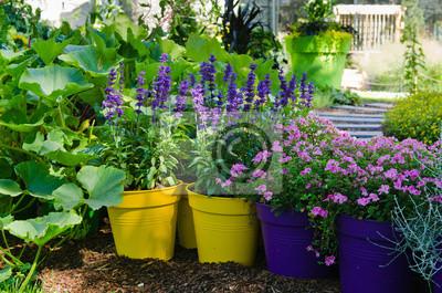 Piękne Kwiaty Doniczki Stoją W Ogrodzie Close Up Obrazy Redro