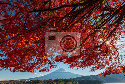 Piękne Mt Fuji z Red Maple drzewa jesienią