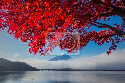 Piękne Mt Fuji za klonu