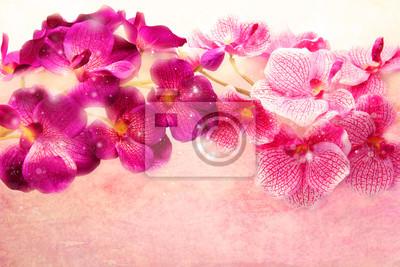 Obraz Piękne purpurowe i różowe orchidee na różowym tle miękkie