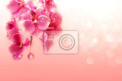 Obraz Piękne różowe storczyki na miękkim tle różowy