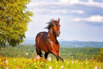 Obraz piękny koń skoków na zielonej łące